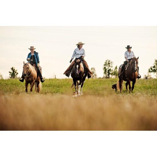 Satsang se Zdenkou Pohlreich - setkání s koňmi v přítomnosti